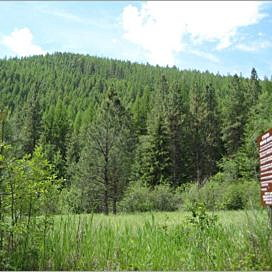 Work starts to thin trees at Rattlesnake trailhead