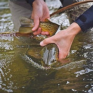 Warm temperatures in Bitterroot, Clark Fork rivers prompt fishing restrictions