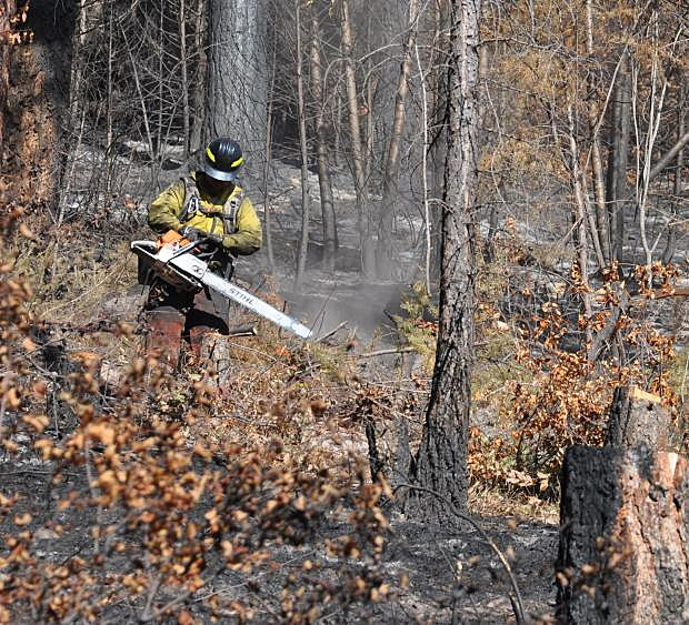 Lolo National Forest proposes salvage logging in 5 burned