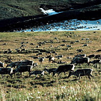 Tester letter unheeded: Republicans move closer to opening ANWR to drilling