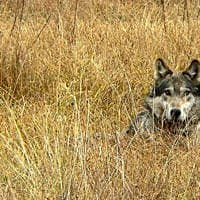 9th Circuit: Should feds prosecute ignorant endangered species killings?