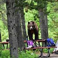 Many Glacier Campground reopens to tents after grizzly bear eludes capture
