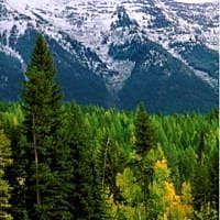 Scientists: North American forests may be near carbon-storage limit