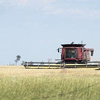 Winter wheat harvest begins on Montana's Hi-Line